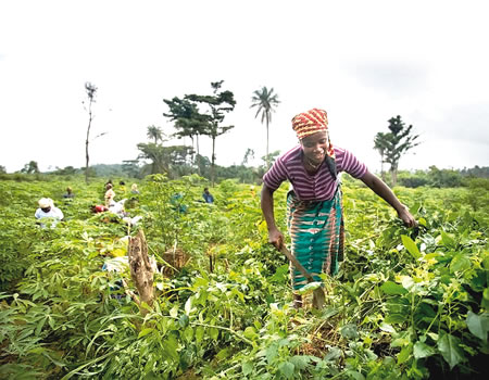 NAFDAC to ban paraquat, atrazine use by farmers