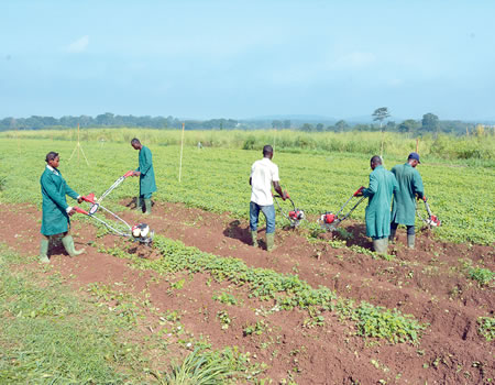 Private sector driven seminar on rural agriculture development to hold October