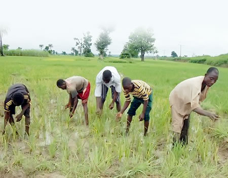 youth, training Oyo farmer